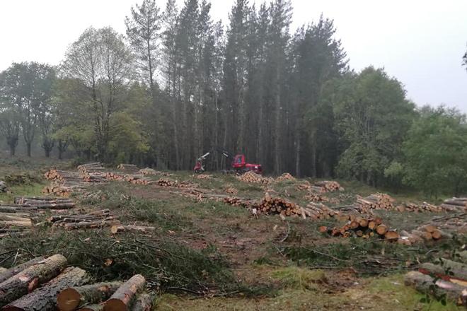 Publicado el decreto que regula los aprovechamientos forestales