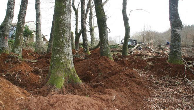 La tala de frondosas la hacen de una manera manual y sólo durante los meses de invierno.