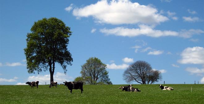 CIAM vacas pastoreo2
