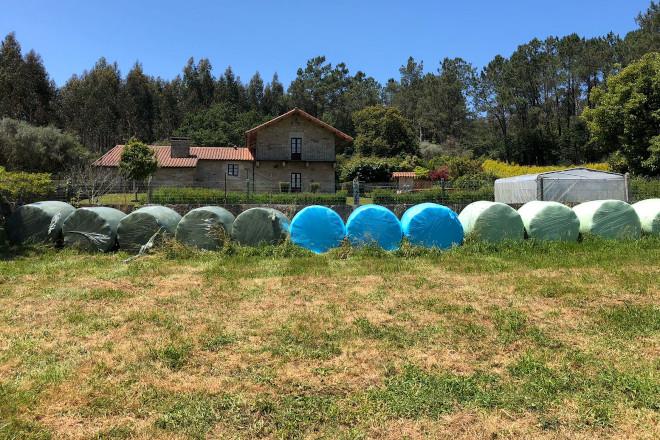 Clasificar as bolas de silo de herba segundo o seu valor nutricional, unha forma de abaratar a ración