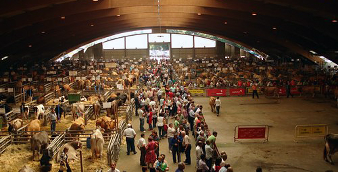 Mercado de Pola de Siero, que celebra feira de gando de abasto os luns e de recría os xoves