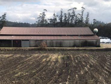 Alúgase granxa de vacún de leite na Baña