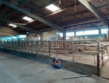 Alúgase explotación gandeira en Paradela (Lugo)
