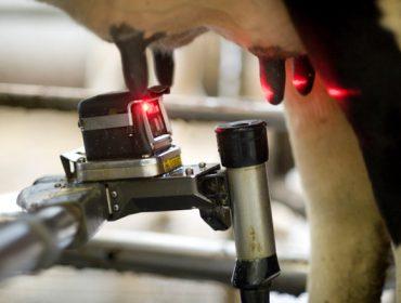 Webinar este mércores sobre alimentación en gandarías de vacún de leite con robots de muxido