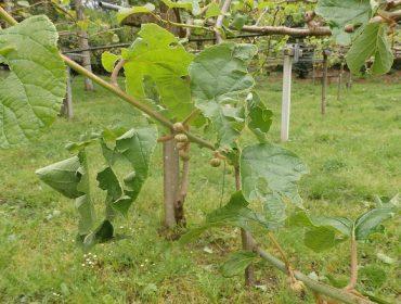 Consellos para o coidado das froiteiras