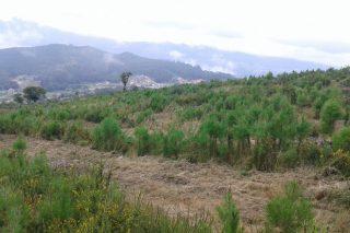 O monte veciñal do Viso impulsa un proxecto de absorción de dióxido de carbono