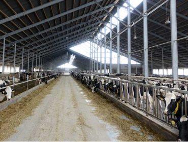 Eibau eG, como traballa unha granxa cooperativa de 1.400 vacas