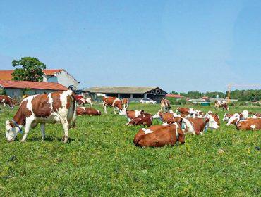 Pradarías en Francia altamente produtivas e resistentes á seca