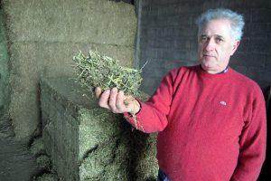 Manuel amosa a alfalfa que inclúen na ración
