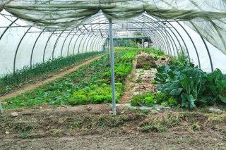 Curso de iniciación á produción de cultivos alternativos na horta