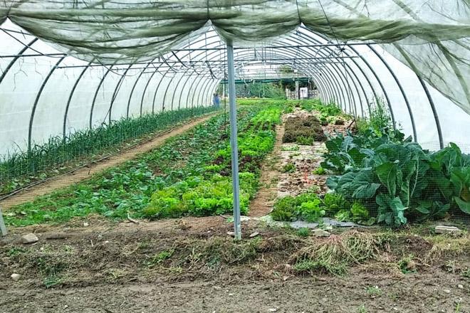 Programa formativo para incorporarse á producción de horta