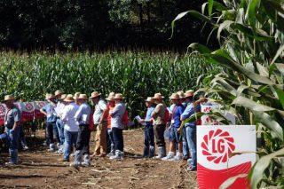 LG Starcover, sementes de millo potenciadas por dous bioestimulantes