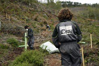 Plantadas 55.000 árbores autóctonas para mellorar o hábitat do oso no Courel