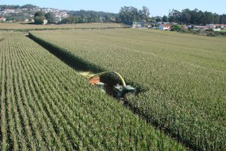 Syngenta sementes de millo: Sempre investigando e desenvolvendo