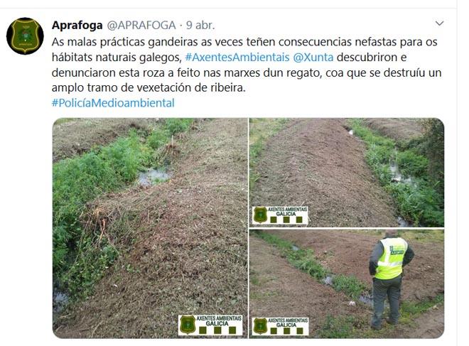 Recente denuncia dos axentes ambientais por unha roza de mato á beira dun regato.