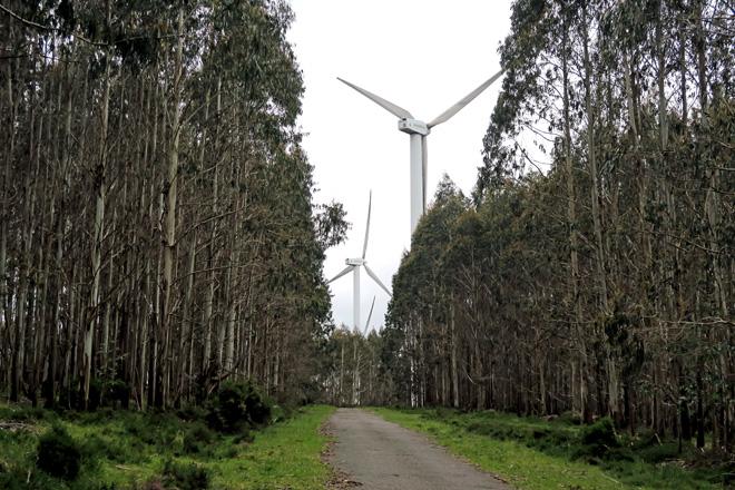 A Xunta anuncia que o Plan Forestal de Galicia reducirá un 5% a actual superficie de eucalipto