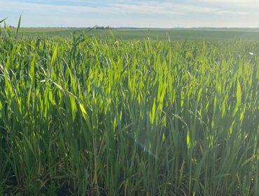 Nergetic Dynamic DS+, o fertilizante con tódolos nutrientes protexidos
