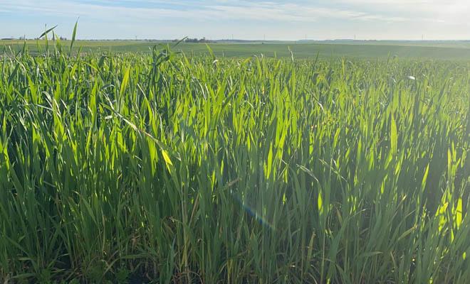 Nergetic Dynamic DS+, el fertilizante con todos los nutrientes protegidos