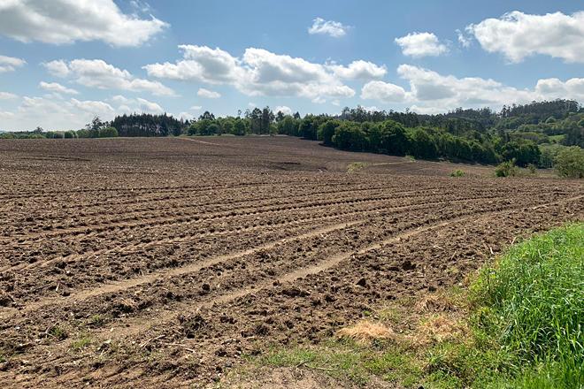 Finca sementada con millo a mediados de abril por Ganxabar
