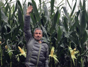 Nutrición integral do millo forraxeiro: Agromaster Start Mini + Agroleaf