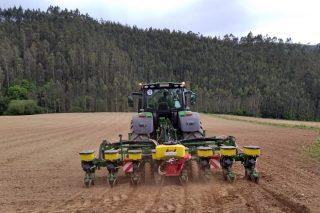 Francia pronostica escasez de sementes de millo para a campaña 2021