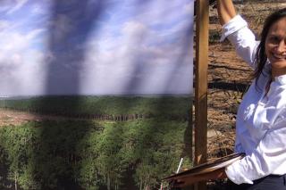 """""""A madeira de piñeiro convertirase nun recurso escaso con elevada demanda"""""""