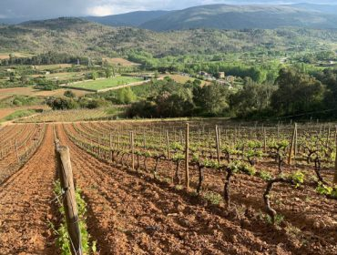 As adegas de Valdeorras reinvéntanse para superar o descenso de vendas provocado polo coronavirus