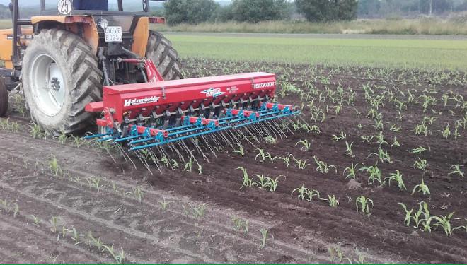La utilización de métodos mecánicos y biológicos será clave para la reducción de herbicidas e insecticidas