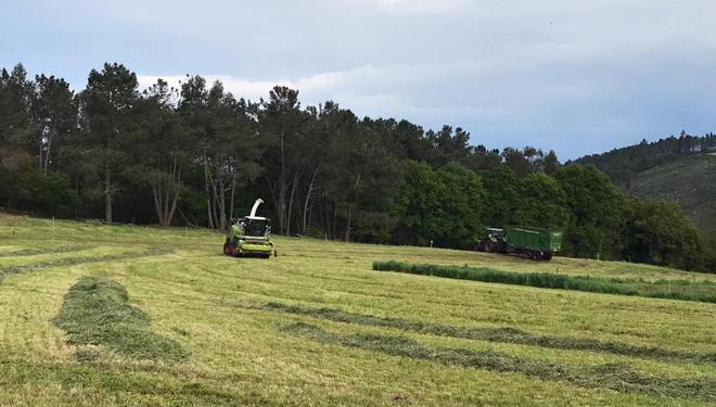 Campaña de ensilado da herba: Grandes producións pero atrasada polas choivas