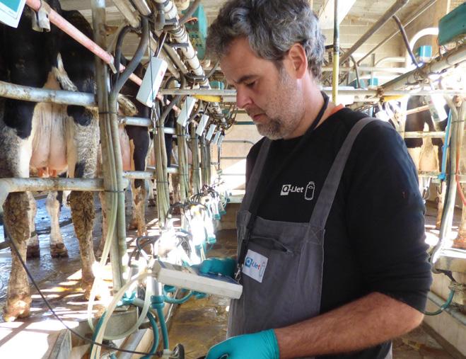 Secado selectivo e cultivo en granxa, dúas ferramentas clave para reducir o uso de antibióticos en vacún de leite