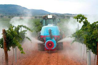 Claves no uso do xofre na viticultura: cando e como aplicalo