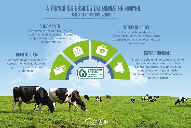 Infografía bienestar Animal LACTALIS