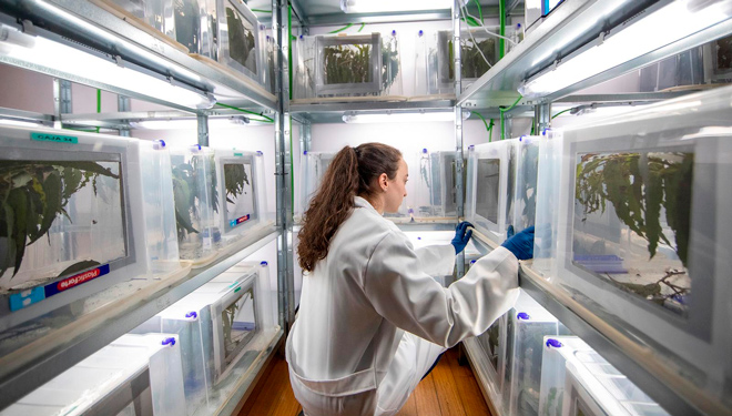 Instalacions-da-biofabrica-de-anaphes-contra-o-gorgullo-de-Toxo-Servizos-Agroforestais-