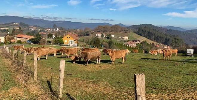 A Comisión Europea focaliza na gandeiría a súa cruzada contra as emisións agrícolas