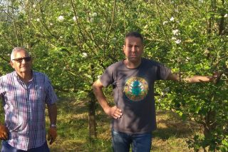 A plantación de Narón na que se acadou o récord de colleita de mazá de sidra: 45 toneladas por hectárea