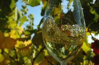 """""""Saccharomyces cerevisiae XG3"""", o lévedo galego que mellora as cualidades dos viños do Ribeiro"""