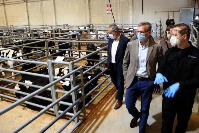 Silleda retoma las pujas de ganado con una bajada general de los precios