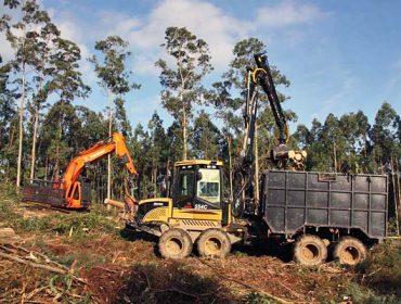 Cal é o turno de corta óptimo no eucalipto nitens en Galicia?