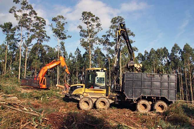O Concello do Valadouro propón axudas extraordinarias para relanzar as cortas de madeira