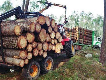 Prezos de adxudicación da madeira nas poxas da Xunta