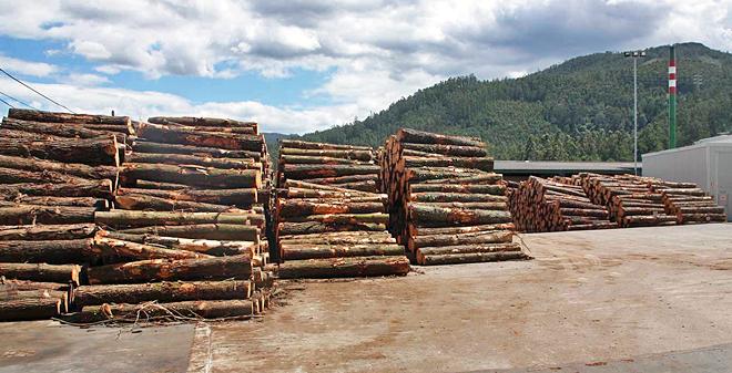 Na madeira de piñeiro augúranse prezos entre 3 e 5 céntimos por baixo pola ausencia de demanda
