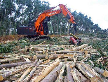 Novo servizo da Xunta para a consulta das cortas públicas de madeira