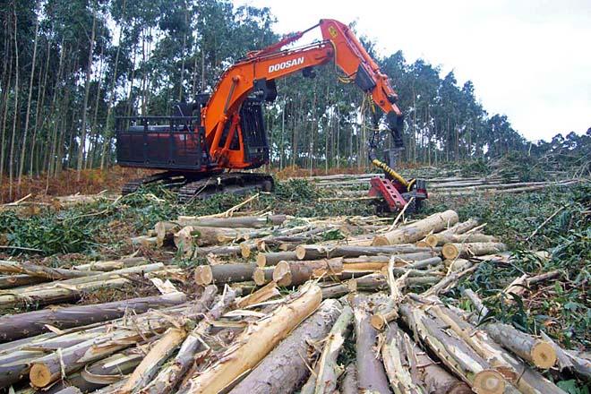 Novo ciclo medio de FP dual de Técnico en Traballos Forestais en Ribadeo