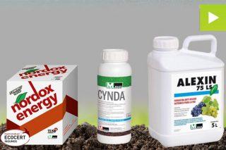 Armas contra o mildio en viñedo: estratexia de Massó