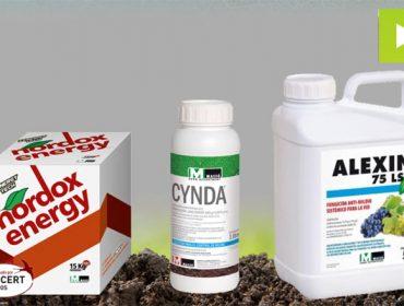 Armas contra el mildiu en viñedo: estrategia de Massó