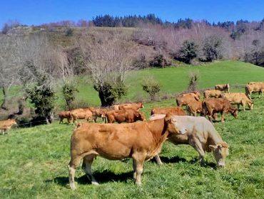 O sector do vacún de carne lanza a estratexia 'Carbono Neutral 2050'