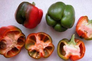 Ya se pueden comercializar las variedades gallegas de pimiento Couto Grande y Piñeira