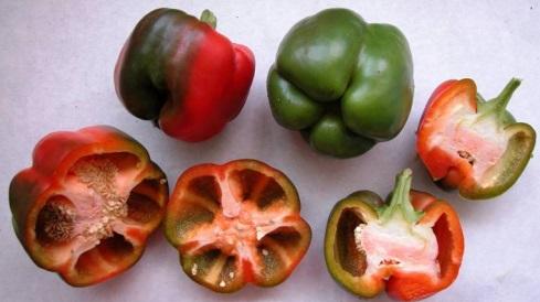 Xa se poden comercializar as variedades galegas de pemento Couto Grande e Piñeira