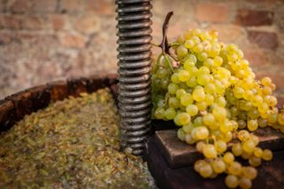 A saúde e a produción do viñedo increméntanse co abono de bagazo