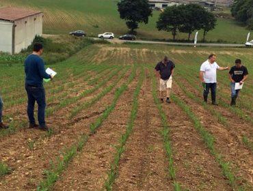 """""""Terdim controla un amplo espectro de malas herbas no millo con alta persistencia"""""""